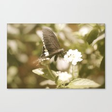 Antique Butterfly Canvas Print