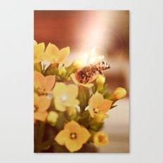 Honey herder 2 Canvas Print