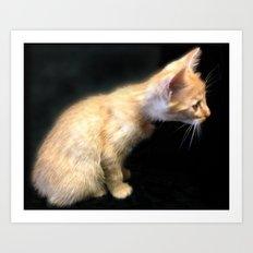 Kitten Curiosity Art Print