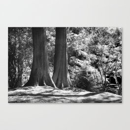 Two trees stand together in Japanese Garden Canvas Print