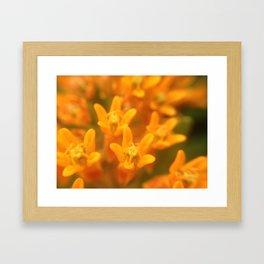 Flower friends Framed Art Print