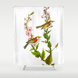 Chestnut Sided Warbler Bird Shower Curtain