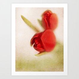 Tulip 2 Art Print