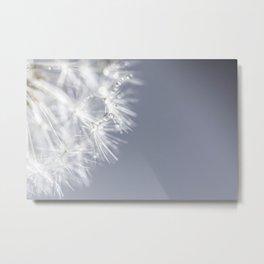 Sparkling dandelion with droplets - Flower water Metal Print