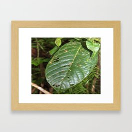 Large tropical leave from El Verde - El Yunque rainforest PR Framed Art Print