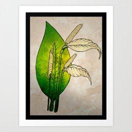 Peace Lily Art Print