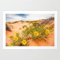 Yellow Flowers in Sand Dunes Art Print