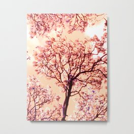 Magnolias in Apricot Metal Print