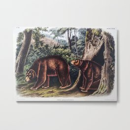 Cinnamon Bear Ursus Americ Metal Print