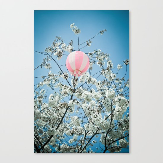 Cherry Bloosom Time Canvas Print