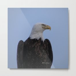 Bald Eagle on Watch along the Kenai River Metal Print