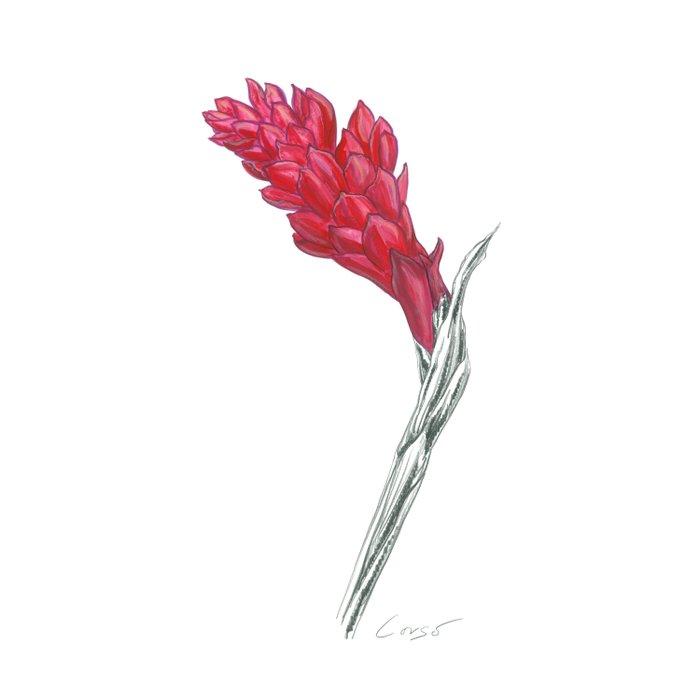 Ginger 01 Botanical Flower Duvet Cover