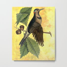 Northern Flicker with Oak, Vintage Natural History and Botanical Collage Metal Print