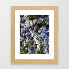 a violet flower in the heart of Athens Framed Art Print