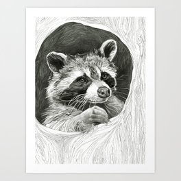 Raccoon In A Hollow Tree Drawing Art Print