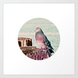 Gentleman Pigeon Bird Northwest Wildlife Art Print