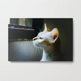 Cat in Hoi An Metal Print