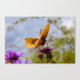 Butterfly and Asters Closeup Canvas Print