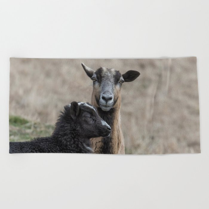 Black Goat and Barbados Blackbelly Sheep, No  2 Beach Towel by belindagreb