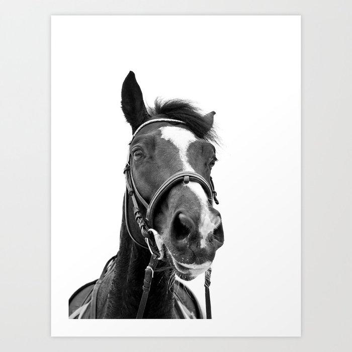 Horse Photo   Black and White Kunstdrucke