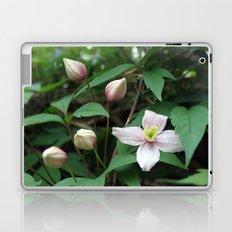 summer pink flower on vine. backyard floral photography. Laptop & iPad Skin