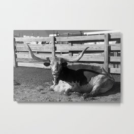 Long Horn www.scsprints.com Metal Print