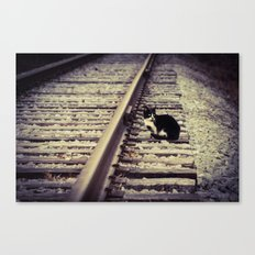 Stray Canvas Print