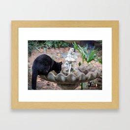 cat dip Framed Art Print