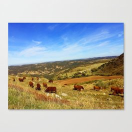 Carefree Canvas Print