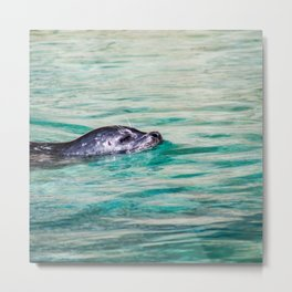 Swimming Seal Metal Print