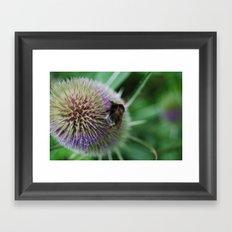 Bee in the summer Framed Art Print