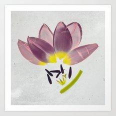 Cuddling Tulips Botanical Blueprints  Art Print