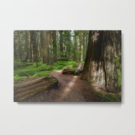 Walk Through The Redwoods Metal Print