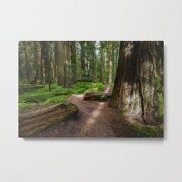 Walk Through The Redwoods Metal Print