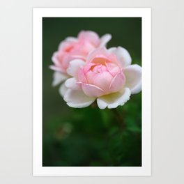 Light Pink Roses on Green Background, Symbol of Love and Friendship Art Print