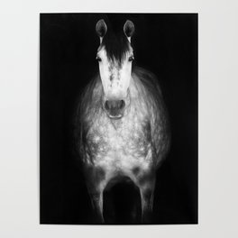 Horse in the dark Poster