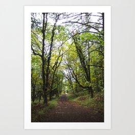 Lush Forest Art Print