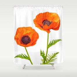 Two beautiful  poppies Shower Curtain