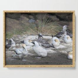 Gannet Family Serving Tray