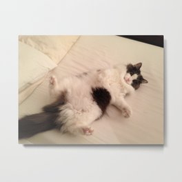 The most perfect cat Metal Print