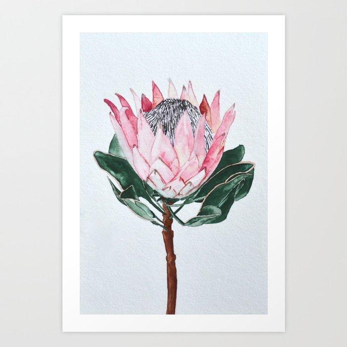 King Protea Art Print