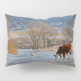 Cow drinking from a mountain stream from under ice in winter Pillow Sham