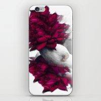 ferret iPhone & iPod Skins featuring Rosy Ferret by Clara J Aira