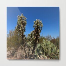 Jumping Cholla Cactus Metal Print