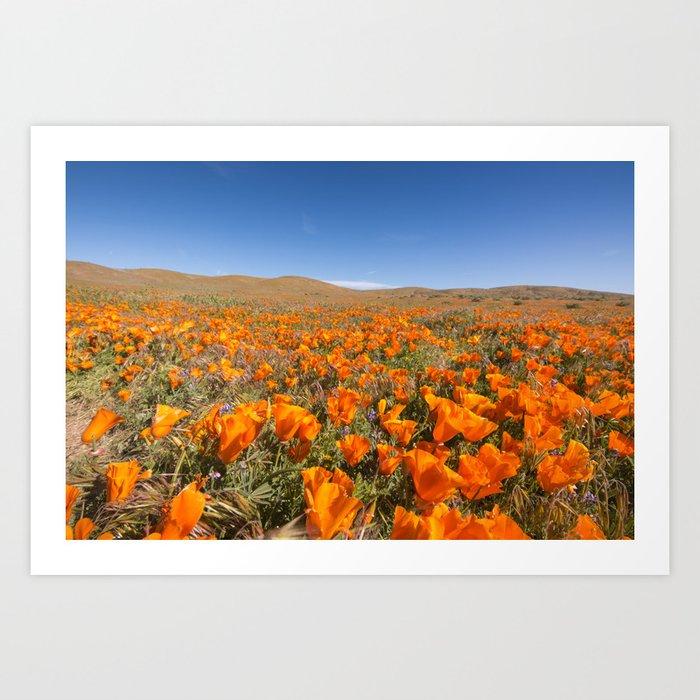 Blooming poppies in Antelope Valley Poppy Reserve Art Print
