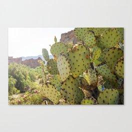 Superstition Cactus Canvas Print