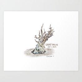 Bristlecone Pine - Great Basin National Park Art Print