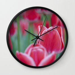 Red tulips with a white border. Close up. Nature photography. Floral art. Keukenhof. Wall Clock