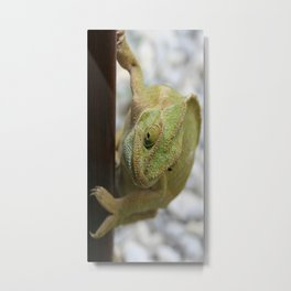 Chameleon: Fifty Shades of Green Metal Print