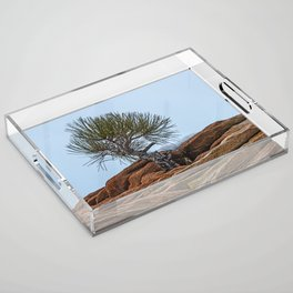 PINE AND PLANET Acrylic Tray